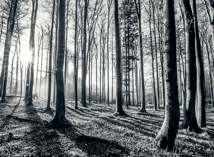 black and white forest wallpaper murals online store