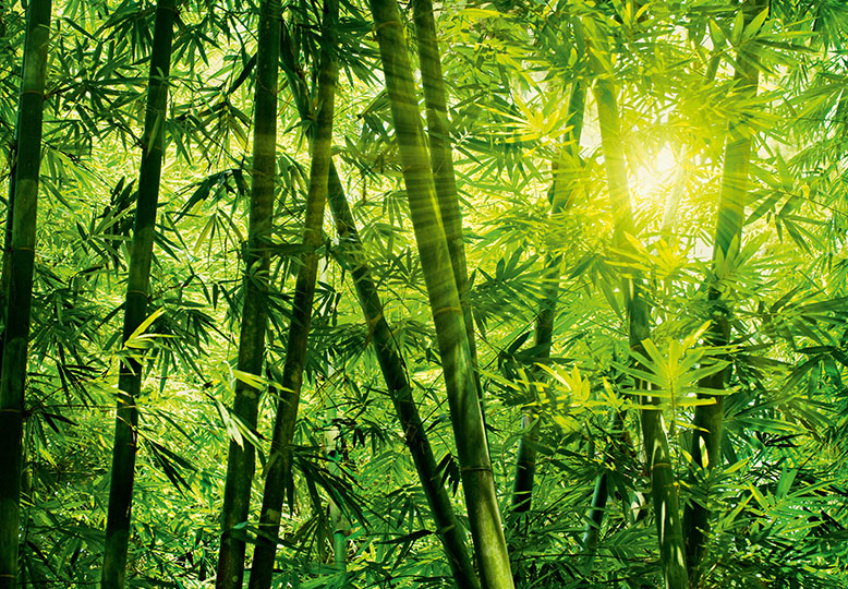 Green bamboo forest wall mural paper for Bamboo mural wallpaper