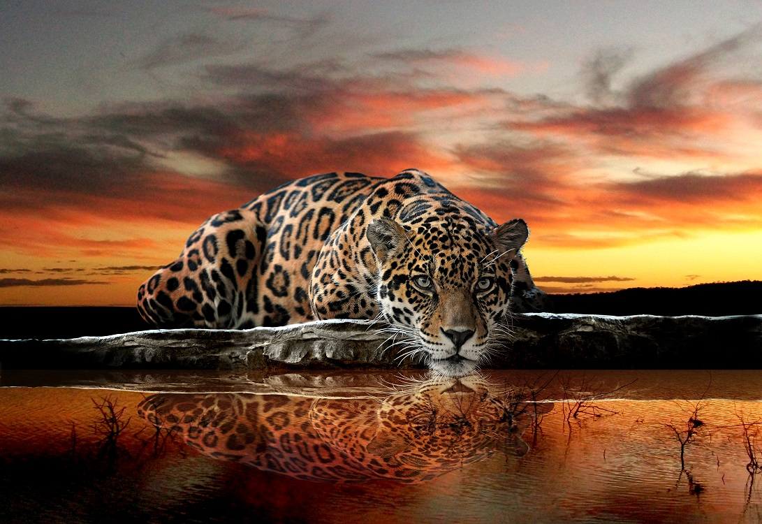 Wild cat jaguar wall murals for wall for Mural wallpaper