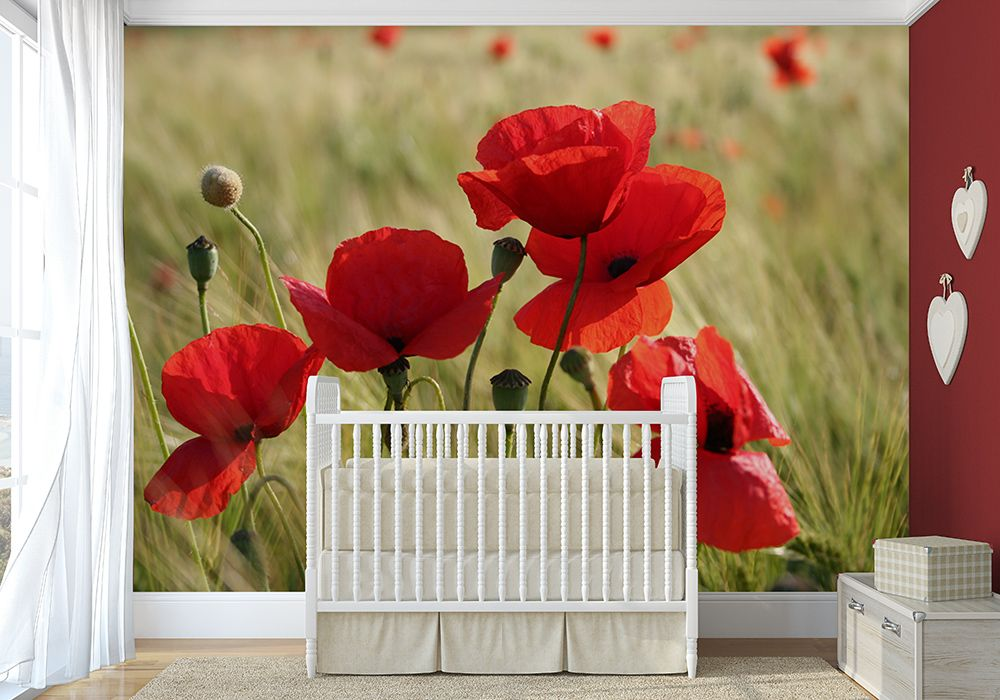 Red poppys wall mural for Mural flower