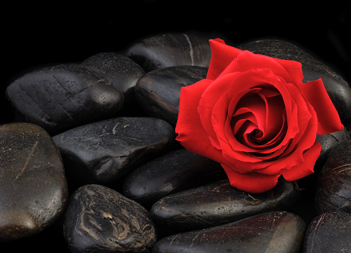 Red rose black stone wallpaper murals by homewallmurals for Black and white rose wall mural