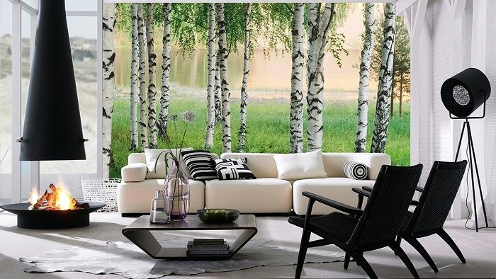White birch trees forest wall mural wallpaper for Birch tree mural wallpaper