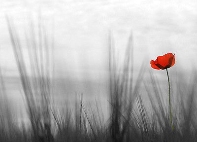 Wall mural photo wallpapers RED LONELY POPPY flower wall art for bedroom walls