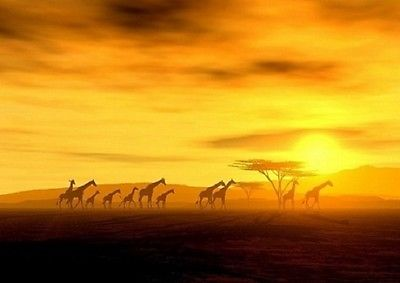 Wall mural WILD AFRICA photo wallpaper GIRAFFE WALKING THROUGH DESERT wall art