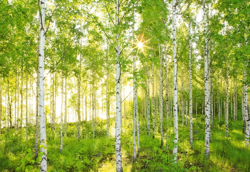 SPRING FOREST wall mural photo wallpaper green nature trees Wall